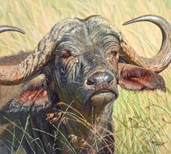 Cape Buffalo by Tony Forrest -  sized 18x20 inches. Available from Whitewall Galleries